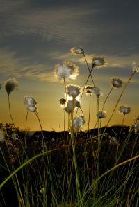 Sommerlys - foto: Gaute Bruvik_200