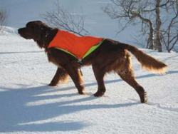 Balto stand vinter_500x500