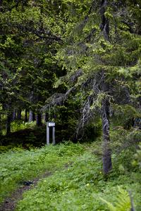 Skogsbilder_MG_5610_200x300.jpg