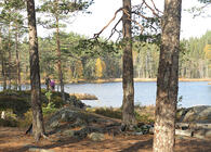 Gamle, åpne skoger med høye trær ved vann er ikke bare vakkert – det er også godt for folkehelsa. Bildet er fra Eriksvann i Østmarka. Foto: Bjarne Røsjø.
