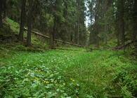 Bilde lånt fra Naturvernforbundet