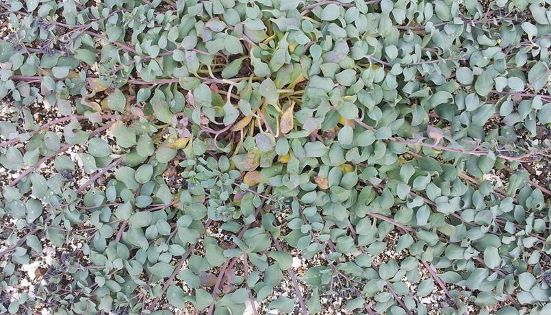 Nærbilde busk