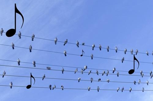 Fugler og noter liten.jpg