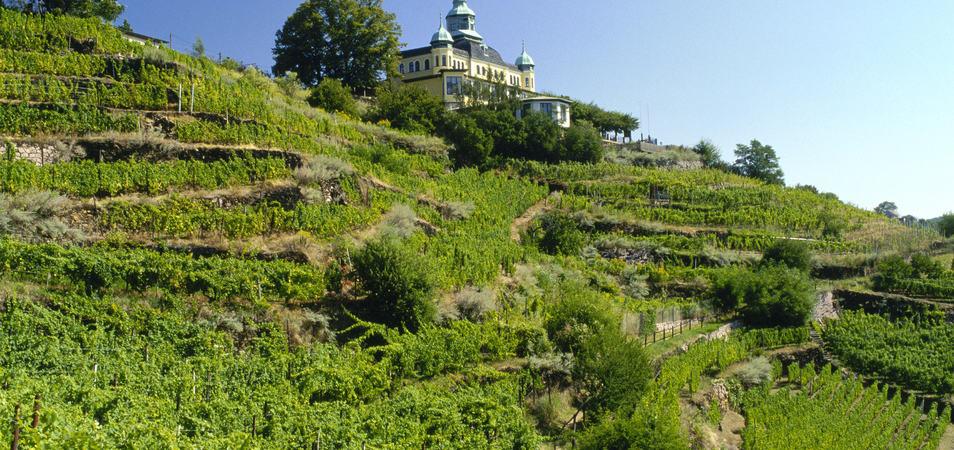 Sachsen Weinregion_A4