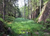 I en stor norsk undersøkelse over motiver for å søke ut i naturen, krysset nesten halvparten av på «naturens mystikk». Foto: Bjarne Røsjø.