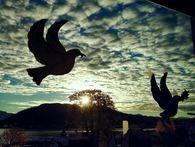 Fredsduer i vindu mot solen over Harstad