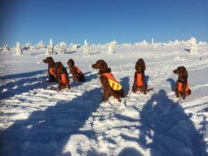 Hunder i fjellet