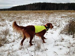 Bjerkaasens Bs Pippa
