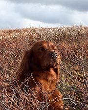 hund i fjellet