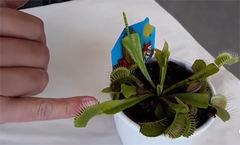 kjottetendeplanteforside