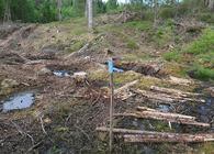 Forskriften betyr at naturvern- og markaorganisasjonenes mulighet for å klage på hogstplaner bortfaller. Foto: Østmarkas Venner.