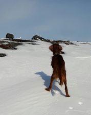 Vinterbilde med stand og rype