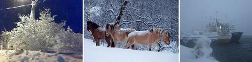 bilderad vinter_500x123.jpg