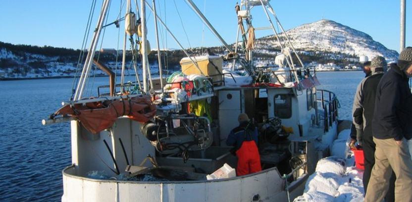 Fersk fisk levert på kaia