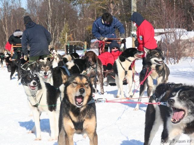 Hundekjøring, Holmen Hundesenter i Alta.  Foto: Alta Havn KF
