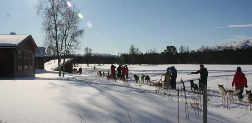 Hundekjøring hos Holmen Husky
