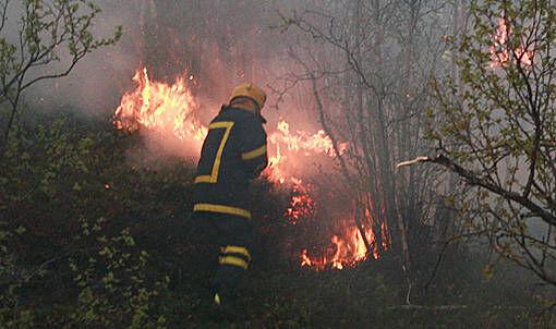 Det meldes om stor skogbrannfare i Salangen for tiden. FOTO: JON HENRIK LARSEN