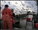Reisebrev fra fornøyde havfiskere
