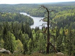 Mosjøen fra toppen av Tonekollen i mai