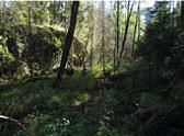 Sølvdoblabekken mot sør. Foto: