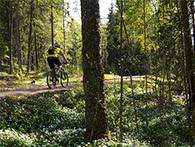 Syklist i Østmarka