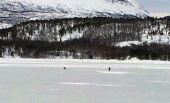isfiskesagfjordenforside
