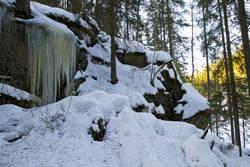 Typisk terreng hvor det er funnet ulvespor i Østmarka Foto:Espen Bratlie