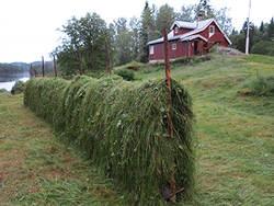 Ferdig hesjet på Bøvelstad