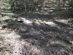 Stygge sporskader etter hogst ved Søndre Dal