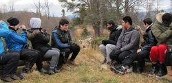 Ulvene i Langedrag naturpark er nysgjerrige på besøket.