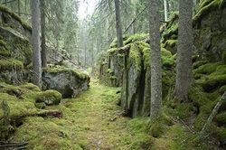 Det vernede Spinneren-området omfatter blant annet den trolske og særegne Svartdalen.