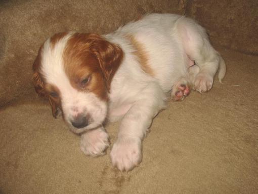 dogpuppy1040_510x383