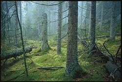 Sverre M. Fjelstad. Norge har forpliktet seg internasjonalt til å verne et representativt utvalg av skog, men verner fortsatt for lite. Bildet er fra Østmarka.