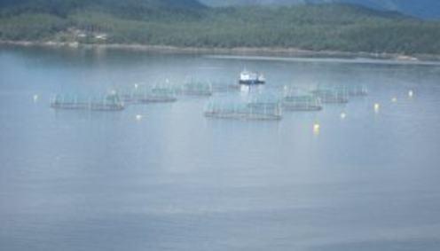 Fiskeoppdrett