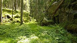 Sweco. Spinneren er et område på 3,5 kvadratkilometer som rommer Svartalen, på dette bildet, Sølvdobla og Dølerud.
