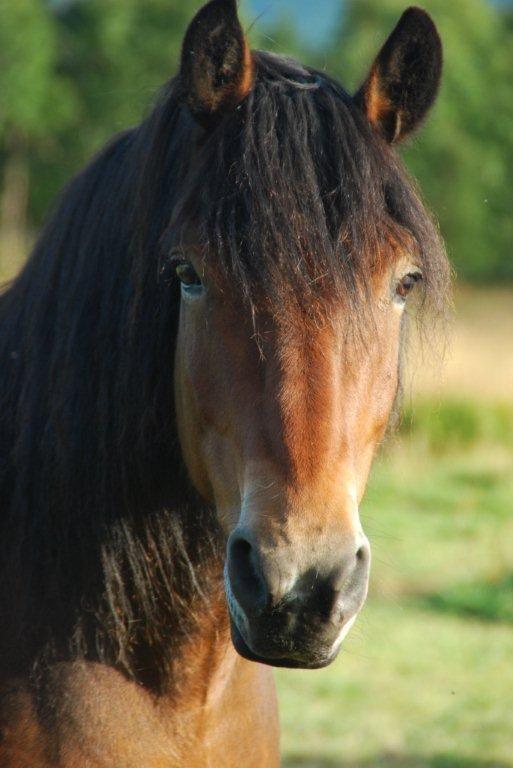 Nærbilde av brun hest