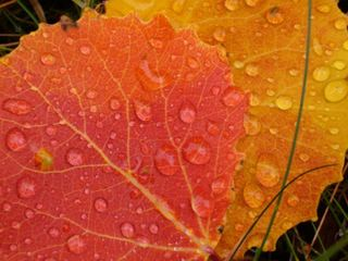 regndråpe på oransj høstløv