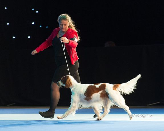 LadyFlanagan_eurodogshow2015