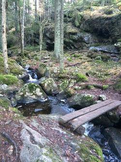 Blåstien sør for Dølerud. Kan du forestille deg en fire meter bred turvei her med 2,5 meter bredt grusdekke?