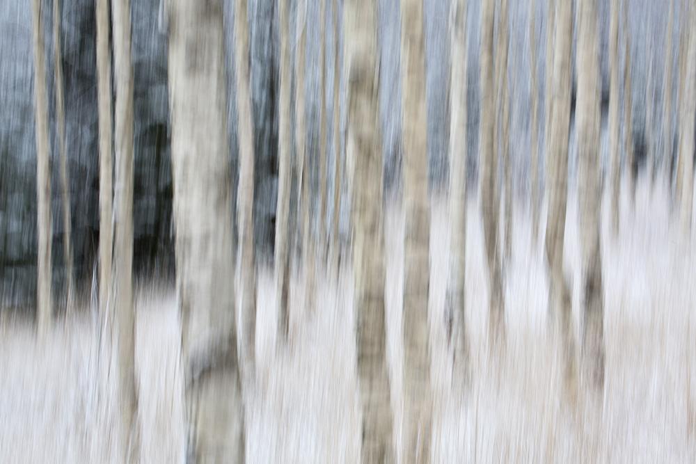 Abstrakt skog - Espen Bratlie.jpg