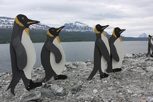 pingvinsaken_BIG2