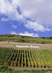Bopparder_Hamm Mittelrhein_02