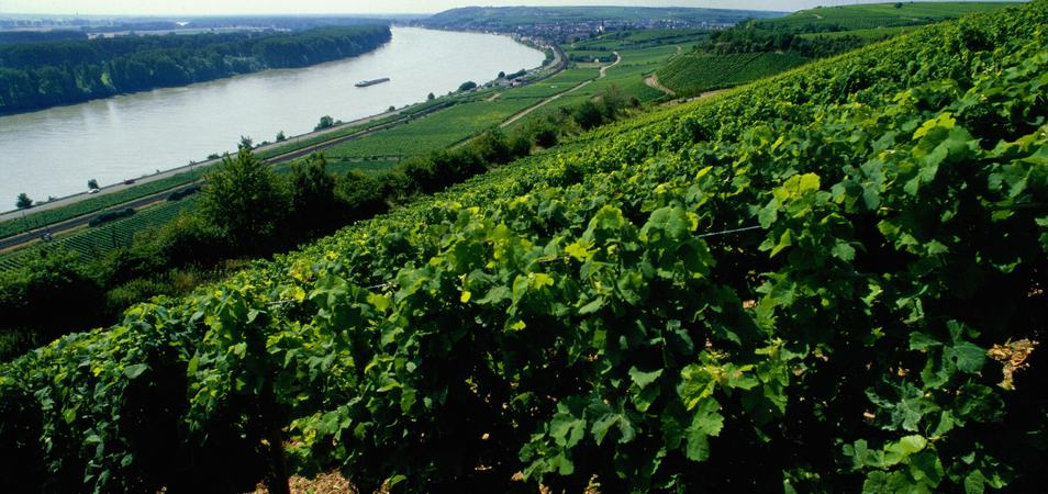 Der Roter Hang Weinberge_A4