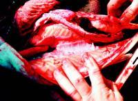 Ulovlig slakting av fisk