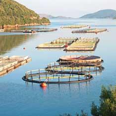 Fiskeanlegg