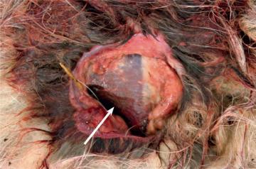 Nærbildet av såret