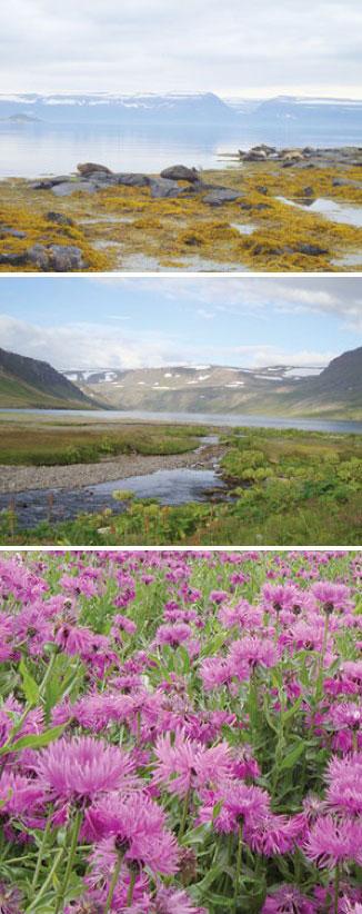 Naturen på Island