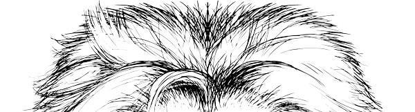 Illustrasjonsbilde av løvehår