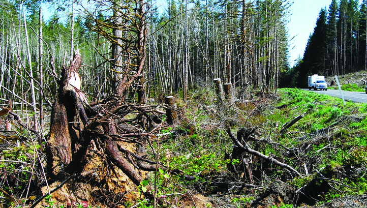 skogindustrien_fokus.jpg