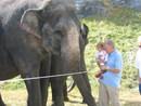 izabella_elefant